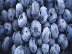 Yaban mersini/Vaccinium myrtillus