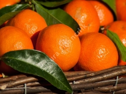 Mandalina King/Citrus sp.