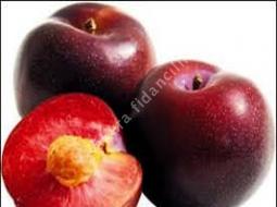 Kırmızı Erik/Prunus Angelino